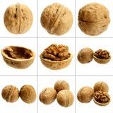 walnut Стоковые Фото