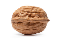 walnut Στοκ εικόνα με δικαίωμα ελεύθερης χρήσης