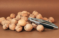 walnut Στοκ εικόνες με δικαίωμα ελεύθερης χρήσης