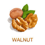 walnut Стоковое фото RF
