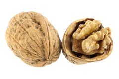 Walnut. Isolated on a white background stock photography