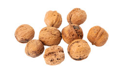 Walnut. Very conducive to the health of Walnut Stock Images