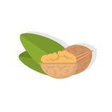 walnut бесплатная иллюстрация