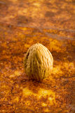 Walnut. On a rusty surface Royalty Free Stock Photography