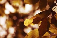 walnut стоковые фотографии rf