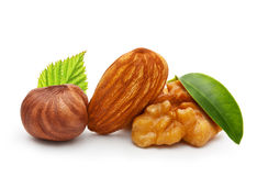 Walnut, almond nut, and hazelnut Royalty Free Stock Image