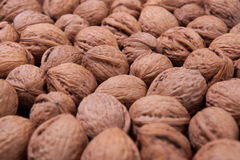 Walnut. Background and texture of clouseup walnuts Stock Image
