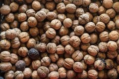 Walnut background texture royalty free stock photos