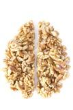 Walnut Brain Stock Photography