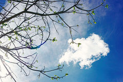 Walnut branches, cloud and glare. Natural background with walnut branches, cloud and glare Stock Image