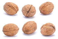 Walnut brown set Royalty Free Stock Photos