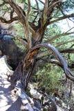Walnut Canyon. Plant life at Walnut Canyon, National Monument in Arizona stock photos