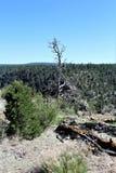 Walnut Canyon. Plant life at Walnut Canyon, National Monument in Arizona royalty free stock photography