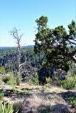 Walnut Canyon. Plant life at Walnut Canyon, National Monument in Arizona royalty free stock image