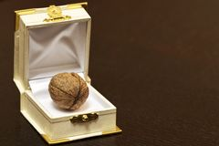 Walnut in a case Stock Photos