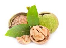 Walnut closeup Stock Photography