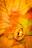 Walnut on colorful autumn leaves. Stock Photography