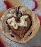 Walnut cracked in heart shape royalty free stock photos
