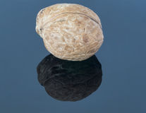 Walnut on a dark background. With reflection in the foreground Royalty Free Stock Photography