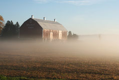 Walnut farm. Image of a  walnut farm taken during a foggy morning Royalty Free Stock Images