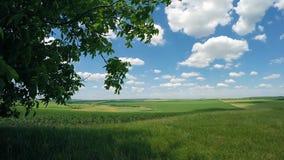 Walnut and farmers` fields. stock video