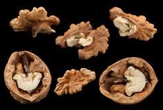 Walnut fruit on black Royalty Free Stock Images