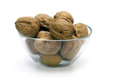 Walnut fruit tree Royalty Free Stock Image