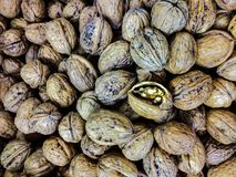 Walnut is the fruit of trees of the genus Juglans, often referred to as the Juglans regia. . The part generally considered edible. Is the seed contained in the stock photos