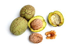 Walnut with green shell  on white background. Walnut  with green shell on white background Royalty Free Stock Image