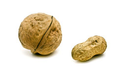 Walnut and groundnut Stock Images