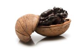 Walnut half shell. A Walnut half in its shell Stock Images