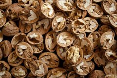 Walnut halves Royalty Free Stock Images
