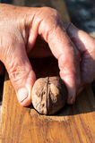 Walnut in hand Stock Photos