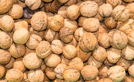 The walnut harvest. Autumn harvest walnut. Ingredient for desserts and natural source of fat and protein royalty free stock photography