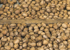 Walnut harvest time Royalty Free Stock Image