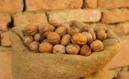 Walnut harvest Royalty Free Stock Photography