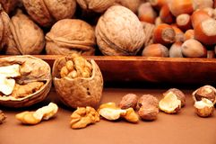 Walnut and hazelnut Royalty Free Stock Photos