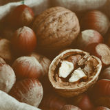 Walnut and hazelnut mix in linen bag, close up Royalty Free Stock Image