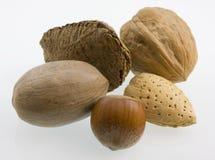 Walnut, hazelnut, pecan, almond, and Brazilian nut. Macro of five nuts in shells - walnut, hazelnut, pecan, almond, and Brazilian on white background Stock Image