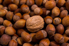 Walnut among hazelnuts Royalty Free Stock Photos