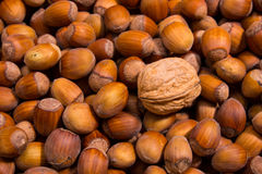Walnut among hazelnuts Stock Photo