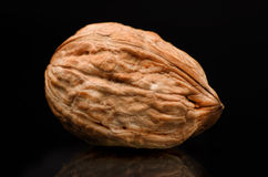 Walnut isolated on black background. With reflection and copy sp Royalty Free Stock Photo