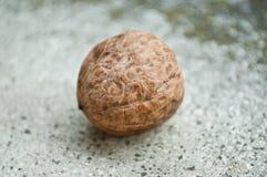 walnut Royalty Free Stock Images