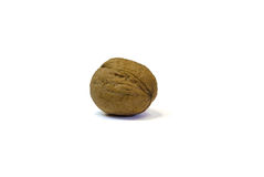 Walnut. Isolated on white background Royalty Free Stock Images
