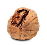 Walnut isolated on white background Stock Photos