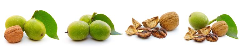 Walnut isolated on a white background. Collage Royalty Free Stock Photos