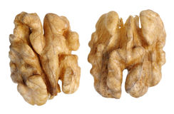 Walnut (Juglans regia) Royalty Free Stock Photography