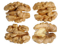 Walnut (Juglans regia) Stock Photos