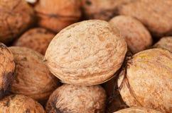 Walnut (Juglans regia) Stock Image