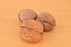 Walnut (Juglans regia) Royalty Free Stock Photo